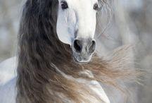 Horses <3 / by Sarah Shonk