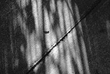 Light & Shadow / by Karin Sorensen