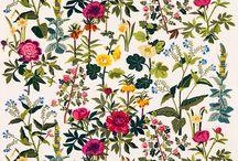 floral patterns / by Eliza Jane Curtis | Morris & Essex