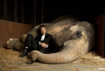 Water for Elephants / by Shelly H