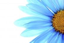 feelin blue / by Caroline Eady