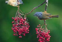 birds / by Kristina W