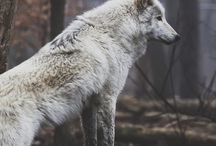 Wild / by Kathy Simpson