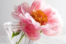 Flowers / by Doha Koma