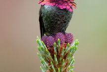 Birds / by Judy YoumansBoudreau