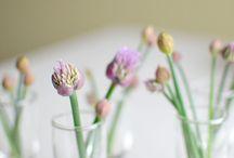 Gardening / by Tammy Jones