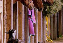 Goat keeping  / by Missy Larson-Sarginson