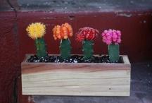 Plants / by Teena Bartel
