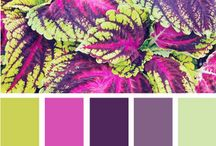Colour Inspirations  / by ~  Craftlover  ~ Caroline F McGrath
