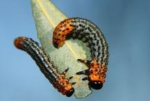 beautiful bugs / by Lilly Lu