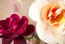 Flowers / by Frances Schultz