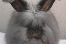Angora Rabbits / by Russ Heddleston
