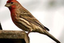 bird watch / by L Atlas