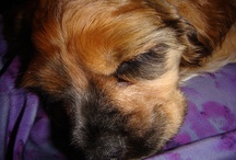 Awwww.....Precious Pups  / by Linda Imus