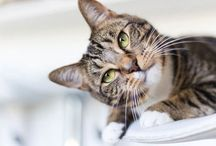 Pets / by Better Homes and Gardens Australia