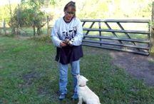 Dog training  / by Tracy Larson