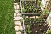My Urban Garden / by Rachael | Spache the Spatula