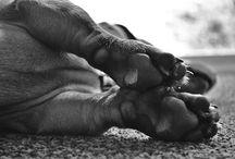animal love <3 / by Renee LeBlanc