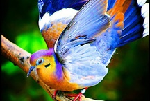 Feathered friends  / by Rachel Goodell