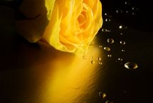 All Things Beautiful...Black and Yellow... / by noelene ward