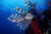 A Dive Under The Sea / by wendy wheaton