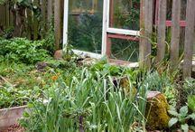 ...kitchen garden... / by Lindsay Roberts