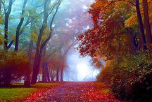 Fall/Thanksgiving / by Christine Aholt-Laine