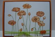 SU Pleasant Poppies / by Karen Kaehn