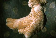 chicks rock! / by Harmonie Noble