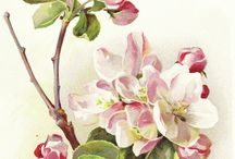 Art Inspiration ~ Floral / Canvas & Decorative painting  / by Judy Hallmark