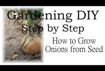 Fruit and Vegetable Gardening / by Bernadette Fox