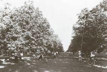 Walnut History / by California Walnuts