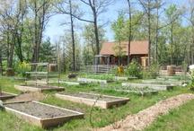 Homestead/Farm / by Michele Johnson