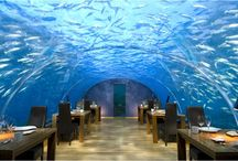 Amazing Restaurants / by mark fritts