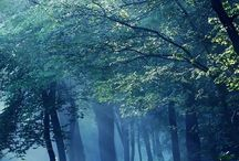 Hiking Trails / by Edrie Crisp