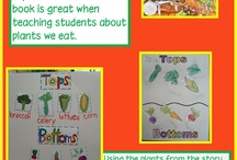 Kindergarten Plants Unit / by Megan Skogmo