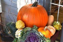 happy fall y'all!  / by Amanda Cobb