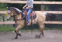 Horse and Barn Stuff / Pictures of my pony, Harlan the Handsome, tack I would love to have, ways to improve my horsemanship, ideas for the co-op, barn and farm.  Buckskins are like cupcakes, the best ones have lots of frosting! / by Chelle Ingram