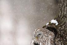 owls / by Gratzy