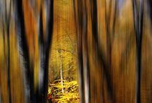 Scenery / by Fergie Ferg