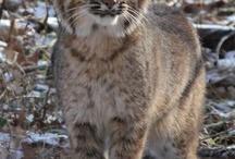 Kentucky / GO CATS! / by Misty Ridner