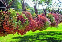 Dream Home - Gardening  / by Kristin Perantoni