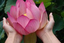 Body - Speech - Mind...in perfect Oneness! / by Iit Penaflor-Medina