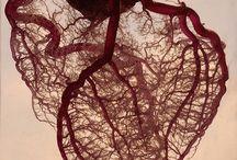 Biology rocks! / by Susie Konstanty