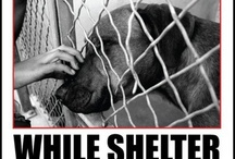 ANIMAL RESCUE  / by Patricia Sheridan