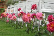 Our Wedding Decor / Wedding centerpieces, chuppahs, aisle flowers, cake flowers and more by The Studio at Cactus Flower, Scottsdale, AZ. / by Cactus Flower Florists
