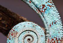 Natural Patterns / by Jocelyn Beatty