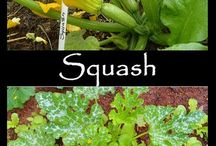 Gardening- Veggies, Herbs / by Christine G
