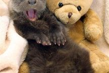 Aww Cute Animals :) / by Abigail Williams