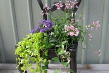 Planting/Outside / by Kristi Ransdell